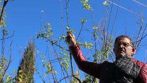 Aralıkta meyve veren ağaçtaki eriği aşeren komşusu için topladı