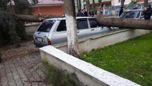 Hassa'da fırtına nedeniyle otomobilin üzerine ağaç düştü
