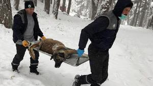 Uludağda donmak üzere olan sokak hayvanları kurtarıldı