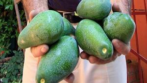 Avokado nasıl yenir