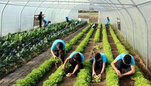 Liseliler, Türkiye için üretiyor