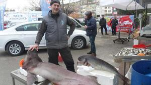 Marmarada yakalandı Kilosu 25 TL