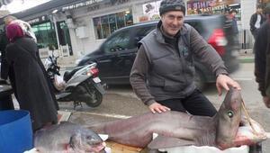 Marmarada dev köpek balığı yakalandı