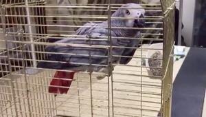 Şiddete uğrayan papağan koruma altında