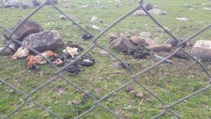 Şanlıurfada kuş gribi şüphesiyle 200 tavuk itlaf edildi