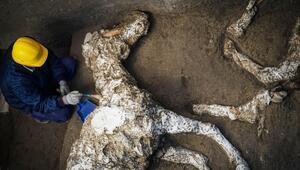 Pompeiide taşlaşmış at bulundu