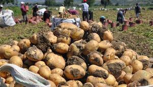 Tarlada 1.5 lira olan patates markette 4 lira
