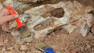 O ilde heyecanlandıran keşif 9 milyon yıl öncesine ait