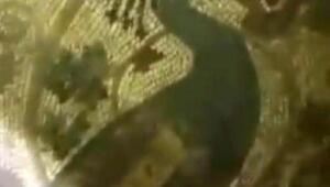 Definecilerin ortaya çıkardığı tavus kuşu mozaiği 1800 yıllık
