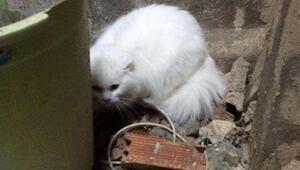 10 gündür kayıp kedi böyle bulundu