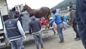 Büyükadadaki yangında yaralanan atlar tedavi için bakımevine götürüldü