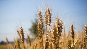 """""""Politika değişmezse gıda fiyatları yükselmeye devam edecek"""""""
