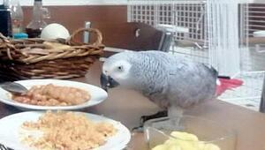 Kebapçıya giren hırsızlar papağan Çapkını çaldı