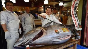Japonyada 278 kiloluk dev ton balığı 3 milyon dolara satıldı
