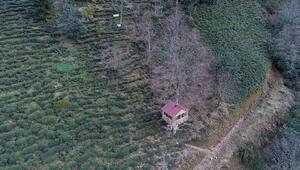 Karadenizlinin ağaç kondu evine ilgi