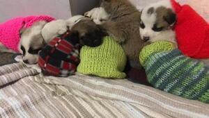 32 yavru köpeğe yaşam dokunuşu
