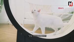 Kedileri fazla kilodan kurtarmak için tasarladılar