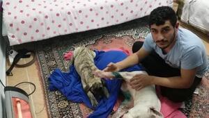 İzmirde köpeğe satırlı saldırı iddiası