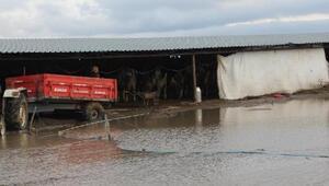 Sel mağduru Kınıklı çiftçiler, destek bekliyor