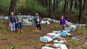 Sakin kent Ulada ayılar arı kovanlarını parçaladı, 1 arıcıya saldırdı
