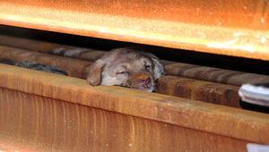 Yavru köpekler 2 saatte kurtarıldı