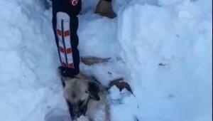 Kar altından çıkarılan köpek, telef oldu