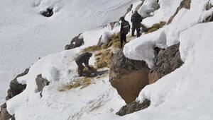 Bingölde yaban hayvanları için doğaya yem bırakıldı