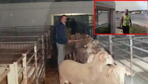 Kontrol memurunu koyun bekçisi yapan borsaya 250 bin liralık mobbing cezası