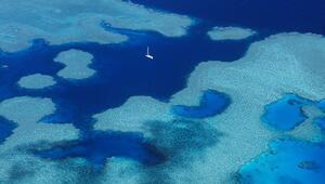 Büyük Set Resifini robotlar korumaya başlıyor