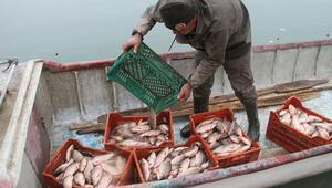 Balıkçıların yeni umudu oldu Kilosu 1 TL
