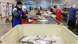 Karadenizden dünyaya somon ihracatı
