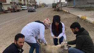 Sokak köpekleri Şefkat Merkezine yerleştirildi