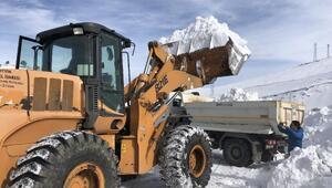 Şavşatta kar üstü güreşleri için kamyonlarla kar taşındı