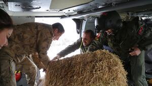 Tunceli Valiliği dağ keçisi avlanmasını yasakladı