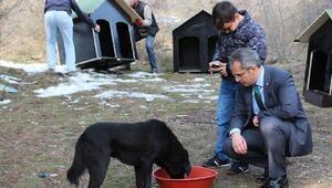 Tosyada sokak hayvanları için kulübe