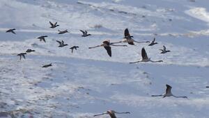 Van Gölü havzası su kuşlarıyla cıvıl cıvıl