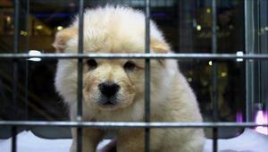 Bakan Pakdemirli açıkladı Hayvanlarla ilgili çok önemli yasak