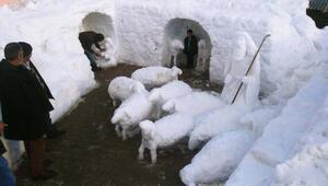 Kardan çoban ve koyun sürüsü yaptı