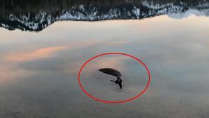 Gölcük Gölünde at ölüsü bulundu