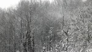 Kırklarelinde kar yağışı başladı