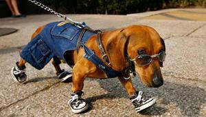 Fransada bir belediye başkanı köpeklerin havlamasını yasakladı
