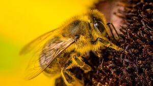 Yeşiller, arılar için bir milyondan fazla imza topladı