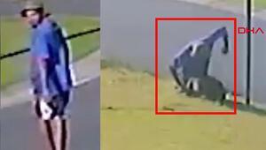 Avustralya bu adamı arıyor Köpeği öldüresiye yumrukladı