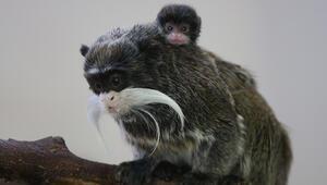 Bursa Hayvanat Bahçesinin yeni üyesi