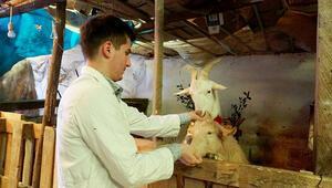 Keçi sütü İsviçre'den, kadayıfı Giresun'dan...