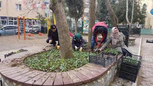 Gürsu parkları ve caddeleri çiçek açıyor