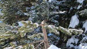 Ilgazda fırtına ağaçla zarar verdi