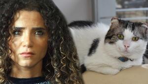 Sokak kedisini zorla eve kapatmıştı Nilay Toprak kendini böyle savundu