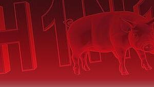 Hindistanda domuz gribi alarmı