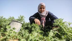 Bayraktar: Günde 16-17 saat çalışan kadın çiftçilerimiz, tarımımızın bel kemiğidir